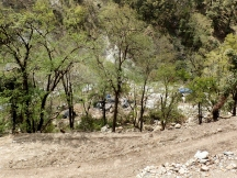 Migrant worker camp through the trees
